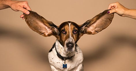 otoplastica-correzione-orecchie-a-sventola-torino_ant